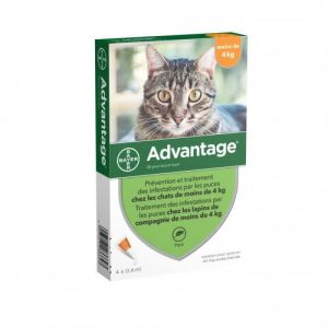 BAYER SANTÉ ANIMALE BAYER ADVANTAGE 80 SOLUTION ANTIPUCE POUR CHAT ET LAPIN DE 4KG ET PLUS 6 PIPETTE